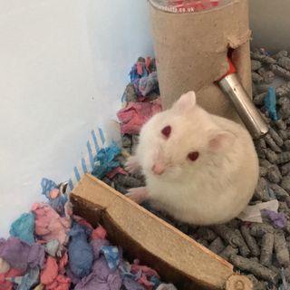 Episode 13 - Hamster update!