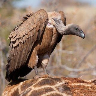 Contro la Retorica sui Fondi Avvoltoio