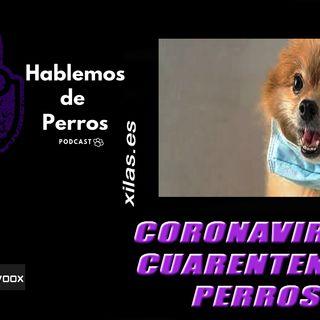 EPISODIO#98: Coronavirus, cuarentena y perros