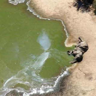 Los 330 Elefantes Muertos