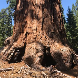 Debbie Stone Explores Sequoia and Kings Canyon National Parks