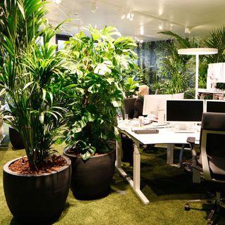 NFON - Dieci idee per lavorare senza impattare sull'ambiente