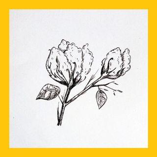 El algodón - TOBAS