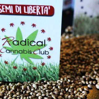 Un seme di cannabis in regalo - Intervista a Riccardo Magi