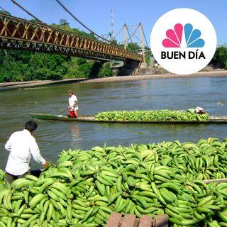 Agricultores Plataneros de Aguaytia producirán compus y harina de plátano