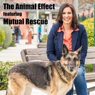 Animal Effect - Mutual Rescue