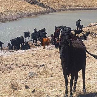 El estado de Chihuahua recuperó un rancho de 30 mil hectáreas en el municipio de Camargo