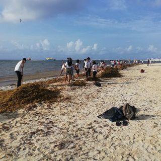 Disminuye el sargazo en las playas de Quintana Roo