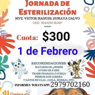 Jornada de Esterilización de Perros y Gatos en Alvarado, Ver