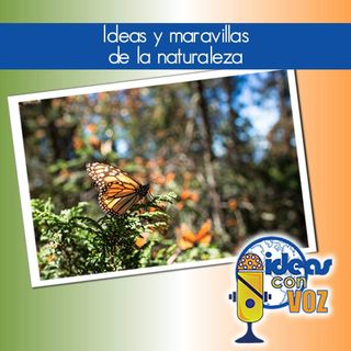 Ideas y maravillas de la naturaleza
