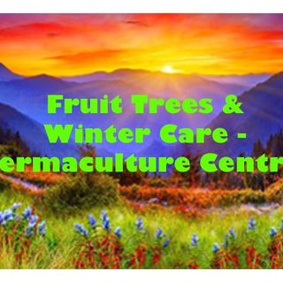 Fruit Trees & Winter Care - Permaculture Central