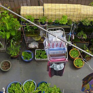 Orti urbani e giardinaggio: dalla California le regole d'oro per farli in modo sostenibile