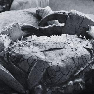 Museo Geopaleontologico GAMPS - Curiosità (w/ Andrea di Cencio)