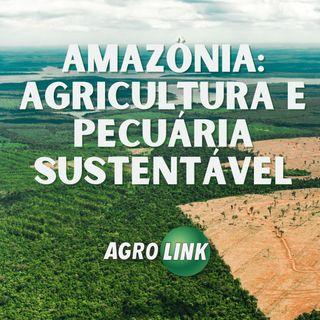 Como produzir e preservar na Amazônia?