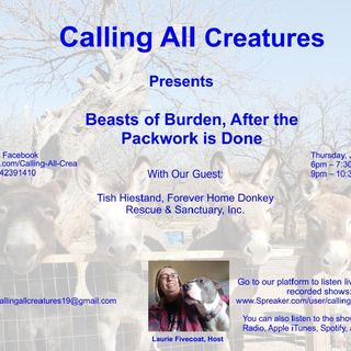 Beasts of Burden, After the Packwork is Done!