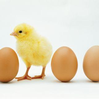 Leucemia por consumir pollo y sus derivados podcast por Ingrid Peguero