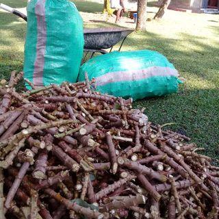 Cassava Tips