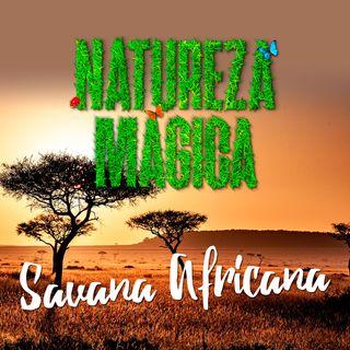 🦁 Sons da Savana Africana • 1 hora