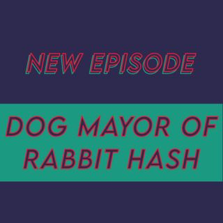 022 - The dog Mayor of Rabbit Hash