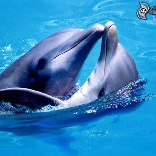 ESSERE IL CAMBIAMENTO - Meditazione Focalizzata in alte vibrazioni di Amore Gratitudine in connessione ai delfini e benedizione delle acque