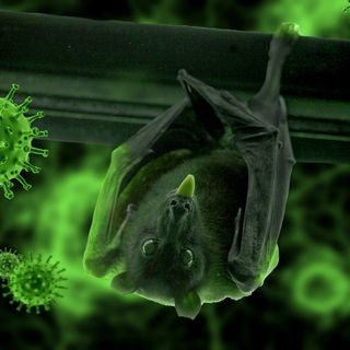 Deadlier Virus in the Wuhan Lab | Nipah Virus | Conspiracy Podcast