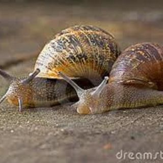 By Special Request.......A Tale Of 2 Snails