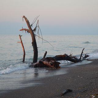 Denizdeki Tuhaf Odun