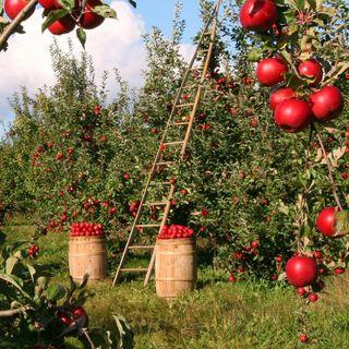 Llenar el campo de frutales, no gracias #72