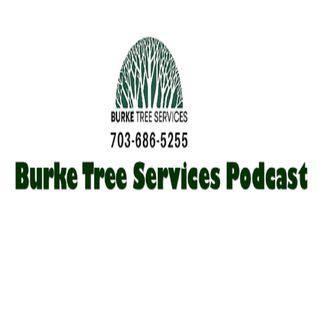 Burke Tree Services