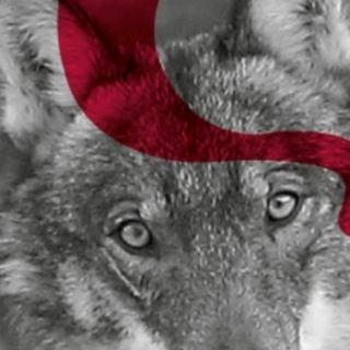 Beidana 98: animali, uomo e ambiente