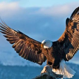 5 Leadership Habits, Every Aspiring Successful Person Should Learn From The Eagle