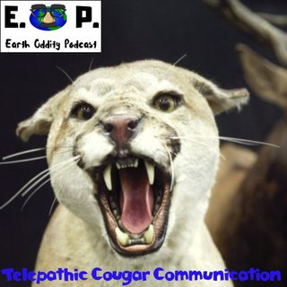 E.O.P. 29: Telepathic Cougar Communication