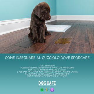 #028 - Come insegnare al cucciolo dove sporcare