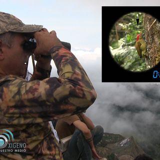 NUESTRO OXÍGENO Bosque de niebla - Ruben Dario Palacio Fund Ecotonos