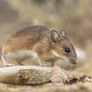 @JennyAitchison @NSWLabor on the Coalition government's handling of the NSW Mouse Plague