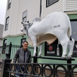 Bull Battle: Everett Restaurateur Battles City Hall Over Bovine Statue