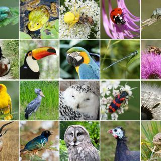 Informe sobre declive de la biodiversidad, con Paloma Nuche (Greenpeace) | Actualidad y Empleo Ambiental #12 - 14/5/19