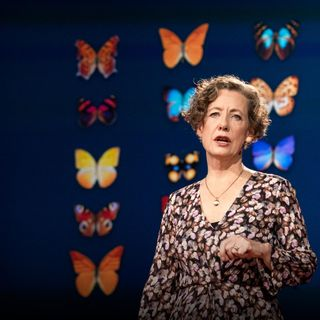 How you can help save the monarch butterfly -- and the planet | Mary Ellen Hannibal