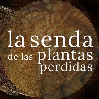 La planta que borda caricias en cobre: Lawsonia inermis