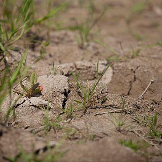 Allarme sale: dalla FAO un simposio per tutelare i terreni del Pianeta