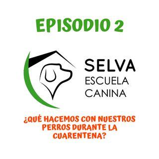 ¿Qué hacemos con nuestros perros durante la cuarentena? (Episodio 2)