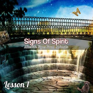 Signs Of Spirit - Animal Signs