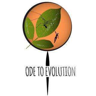 Ode to Evolution - The Tree of Life
