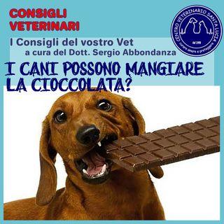 7 - I Cani possono mangiare la Cioccolata?