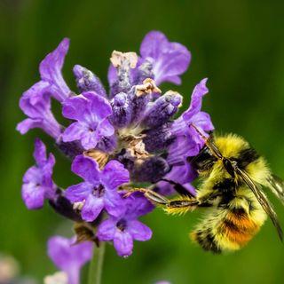 Letizia Bugini: «Le api sono fondamentali per il nostro approvvigionamento alimentare»