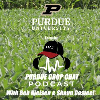 Purdue-Crop-Chat-Episode-6.mp3