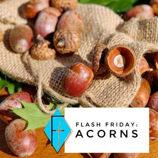 Flash Friday 005: Acorns