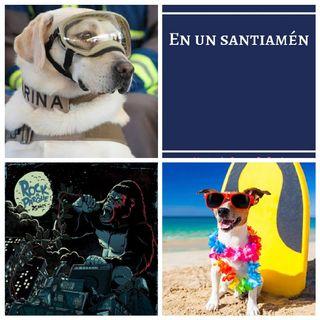 """Perrita Frida, """"En un Santiamén"""", Festival Rock al Parque 2019, Recomendaciones Series y Películas."""