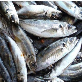 Pescados importados: mucho hielo, menos carne