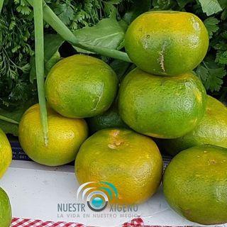 NUESTRO OXÍGENO Agricultura y colores de los alimentos